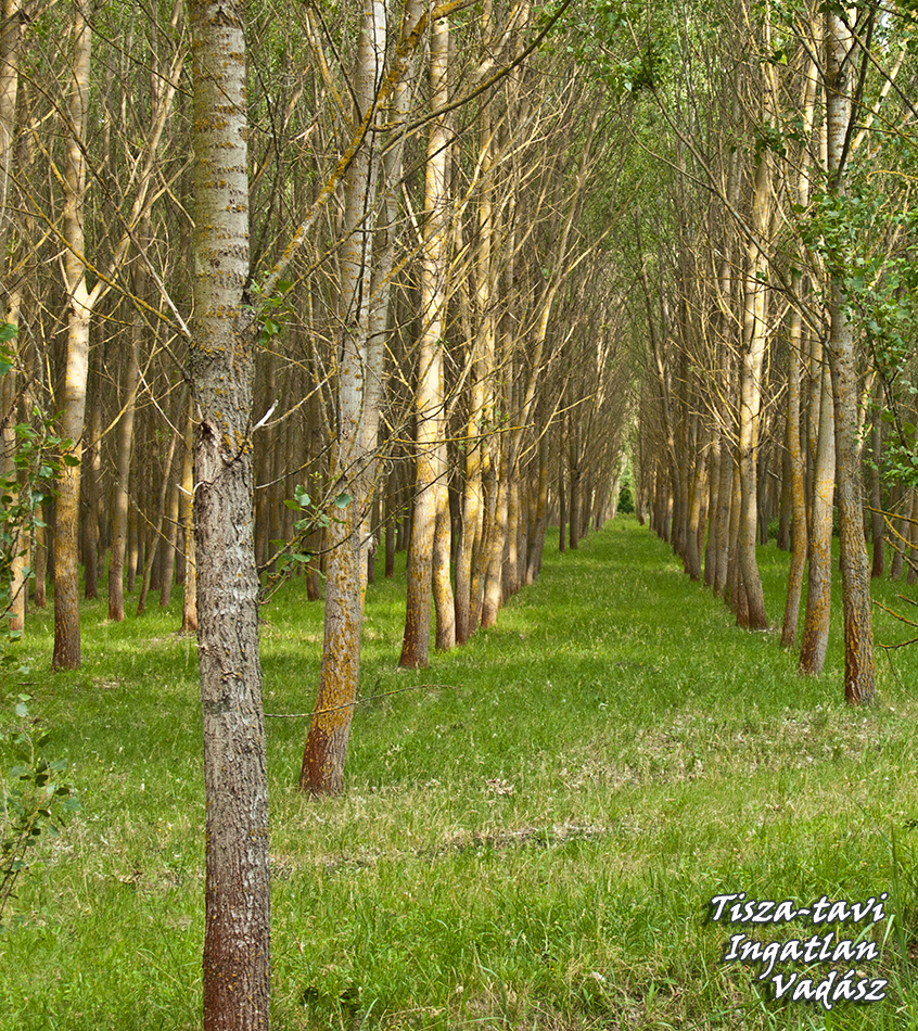 Erdő mellett nem jó lakni, - vagy mégis?